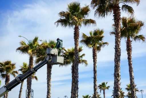 palm tree skinning