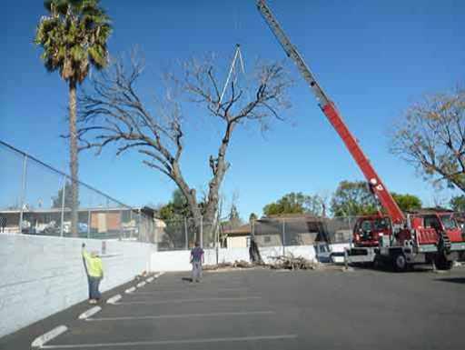 San Fernando Valley tree cutting service