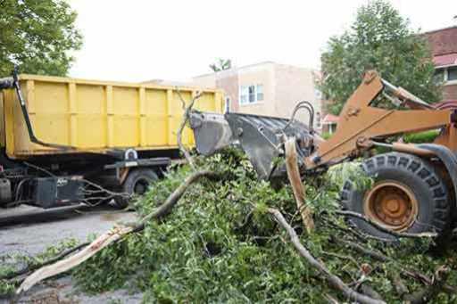 San Fernando Valley tree removal
