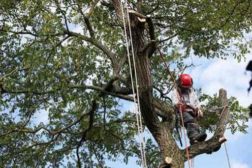 San Fernando Valley tree service