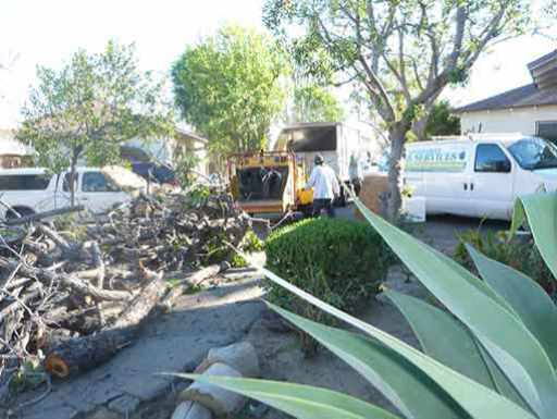 tree removal service in the San Fernando Valley