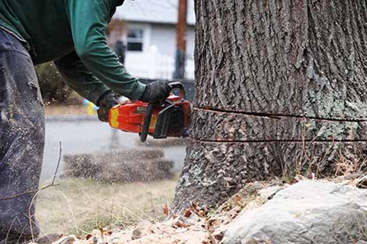 tree removal service in Van Nuys
