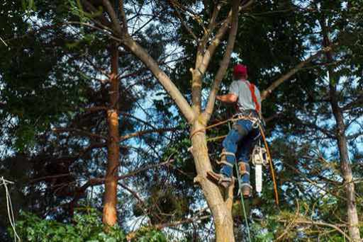 tree trimming in the San Fernando Valley
