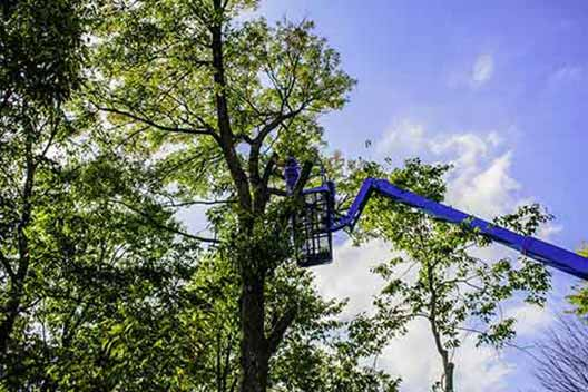 tree trimming service in Van Nuys