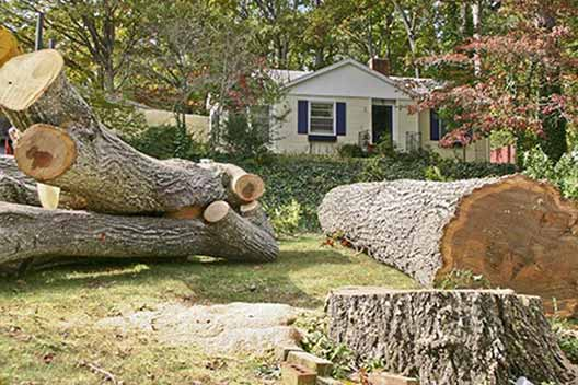 Van Nuys tree removal service