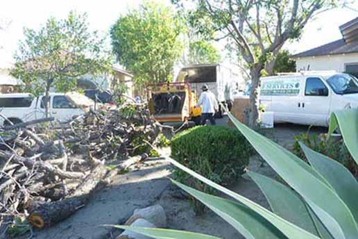 Van Nuys tree services